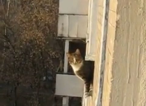 猫 三角飛び00