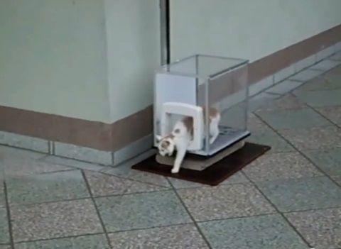 猫 ねこベーター05