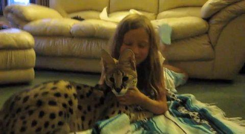 猫 サーバルと遊ぶ子04