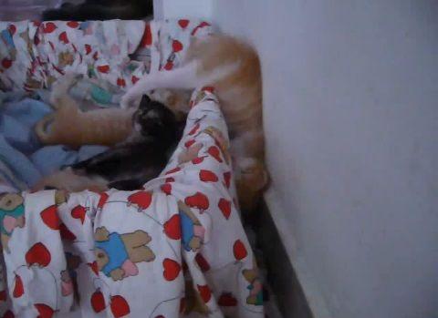 子猫 寝相が悪すぎ00