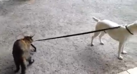 猫が犬をリードで01
