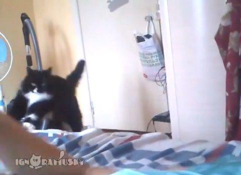 猫 手を出すと威嚇しに来る02