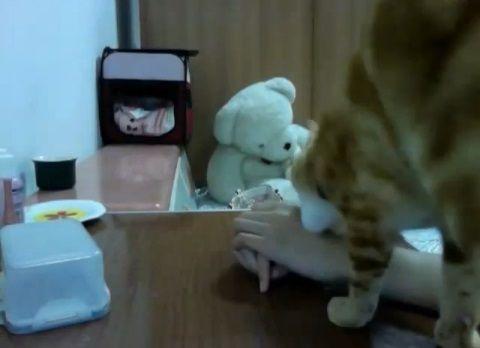 猫 タッパーを開けて欲しくて01