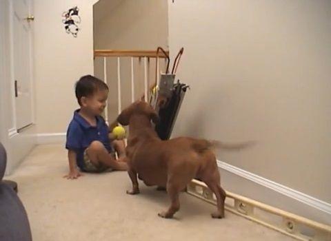 犬 ピッチングマシン?08
