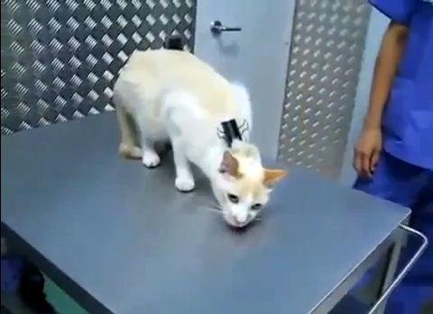猫 大人しくする方法04