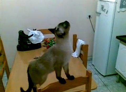 猫 天井の虫が気になる?06