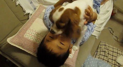 犬 子供とおしゃべりキャバリア01