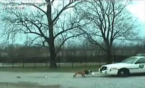 犬 パトカーのバンパー破壊02