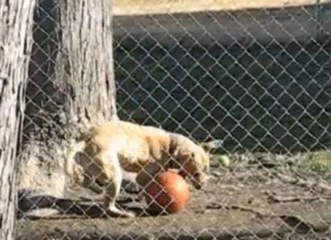 犬 ボールを頭に08