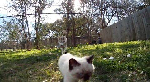 犬猫 狼犬と子猫03