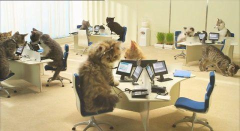 子猫 携帯会社のCM01