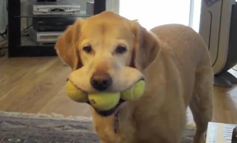 犬 ボール取って05