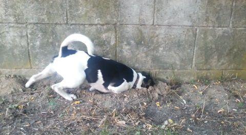 犬 穴掘りどんどん05