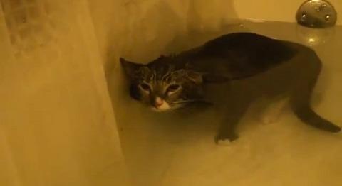 猫 お風呂で悲しげに00