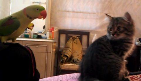 子猫 オウムがにゃ~00