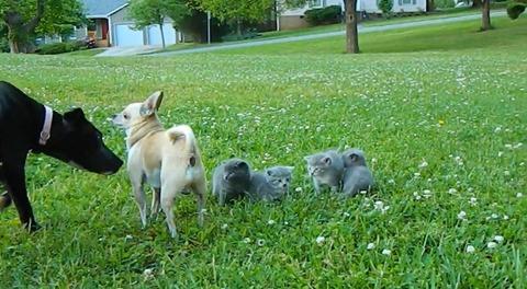 犬猫 チワワブロック04