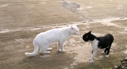 猫 喧嘩で直立00