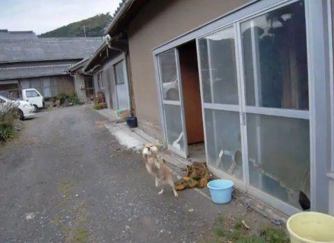 柴犬 営業先で熱烈歓迎02