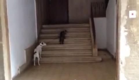 猫が犬をリードで06