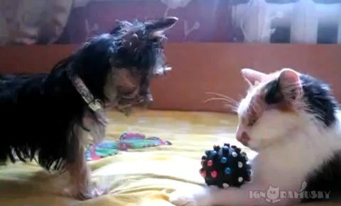 犬猫 おもちゃ返して00