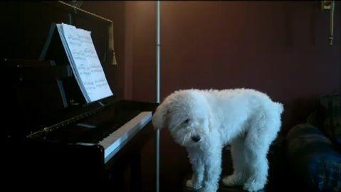 犬 piano 弾語り12
