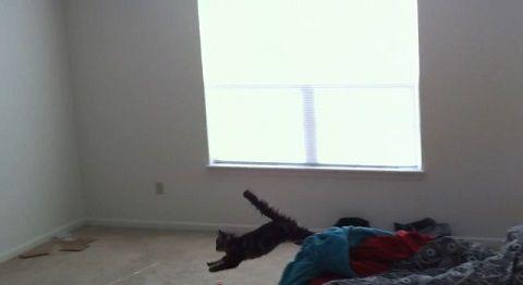 猫 投げてもらって着地の繰り返し06