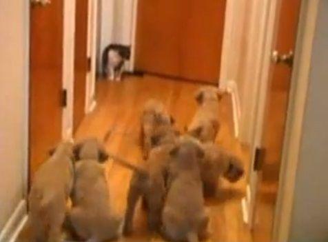 犬猫 複数子犬vs猫01