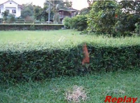 犬 飛び越える犬と越えられない犬06