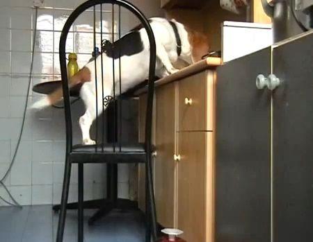 犬 椅子を使ったつまみ食い03