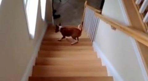 犬 階段は後ろから02