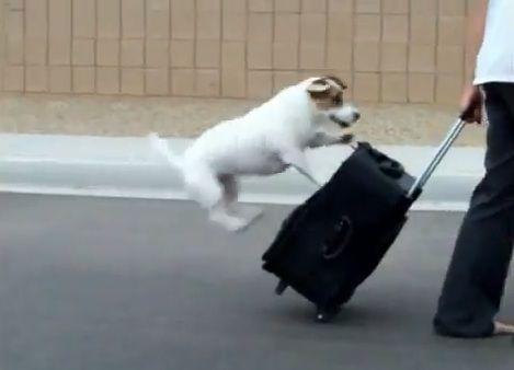 多芸な犬03