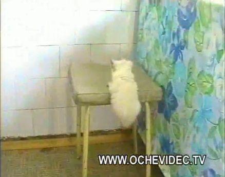子猫 チキンを丸ごとかっぱらい01