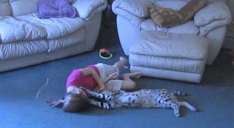 猫 サーバルと遊ぶ子02