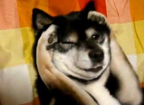 犬 かきかき04