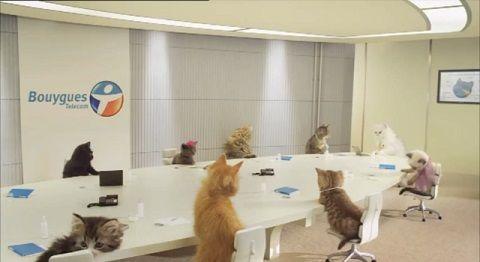 子猫 携帯会社のCM06