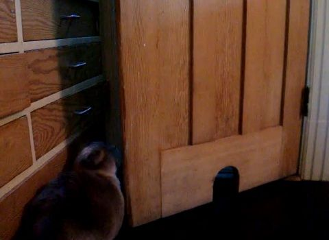 猫 ドアを開ける変わった方法04