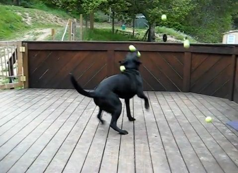 犬 ボールのサプライズプレゼント04