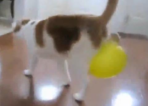 猫 風船04