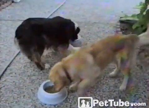 犬 餌入れを行ったり来たり02