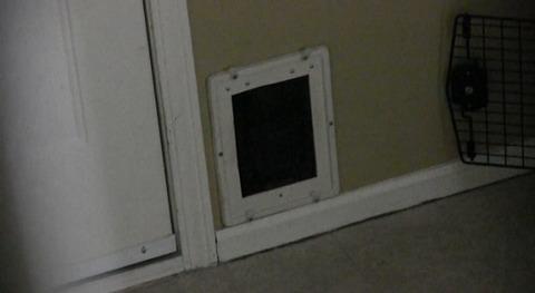猫 猫用ドアから苦しい00