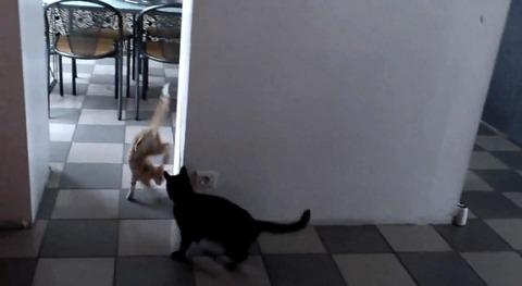 猫が猫を待ち伏せ だけど06