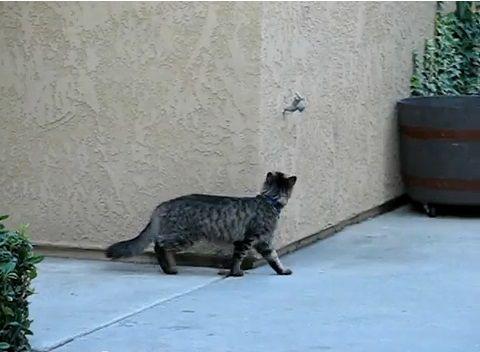 猫 壁をよじ登る02