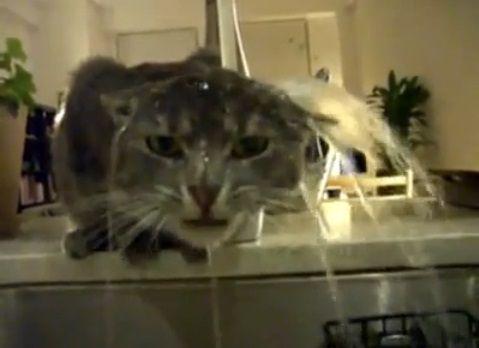 猫 蛇口の水10