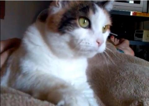 猫 毛布をモミモミ00