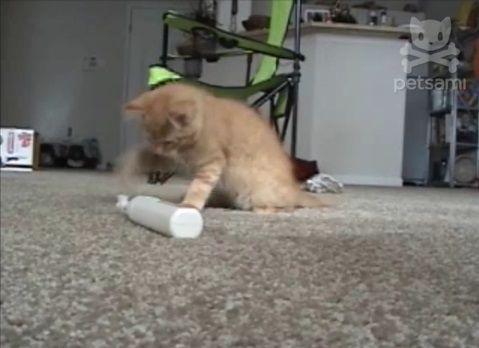 子猫 電動歯ブラシをぺしぺし01