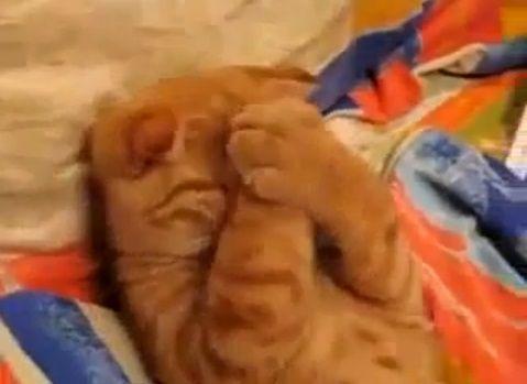 猫 かわいい寝相06