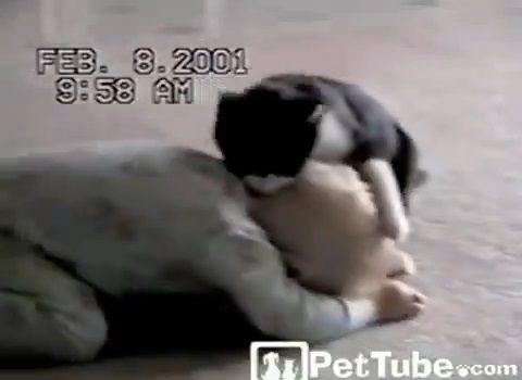 猫 赤ちゃんと取っ組み合い02