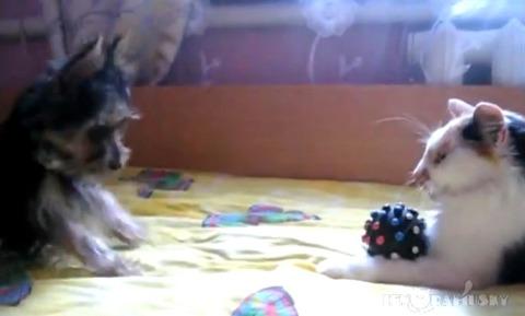 犬猫 おもちゃ返して02