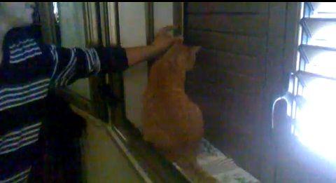 猫 ブラインド開け閉め対決01