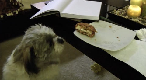 犬 クッキー欲しいシーズー05
